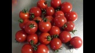 【今日の料理】 栗原はるみさんの料理レシピに最適 ! 旨み抜群の完熟・無農薬トマト・ミニトマトです。トマト通販専門店|西洋野菜とかち農園 北海道十勝