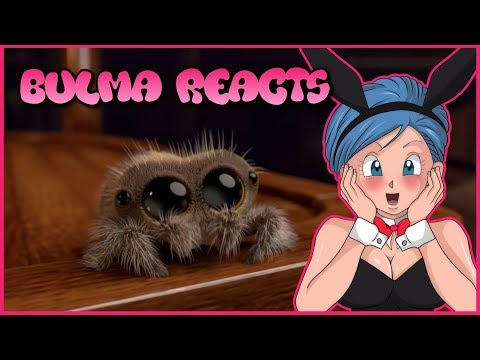 Bulma Reacts to Lucas the spider