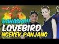 Mba Tina Bule Rahasia Burung Lovebird Ngekek Panjang Kicau Mania  Mp3 - Mp4 Download