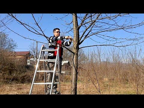 Altoirea pomilor bătrâni