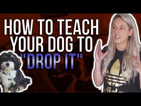 """HOW TO TEACH YOUR DOG TO """"DROP IT"""""""