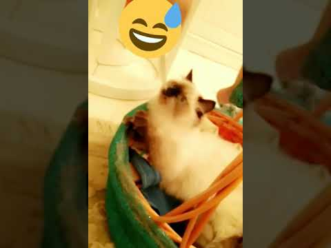 Cat playing 😂😍❤️