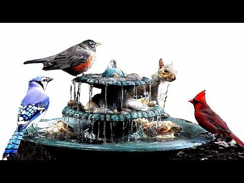 front yard house fountain bird bath w squirrels