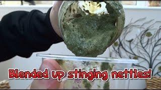 Drinking Blended up Stinging Nettles!