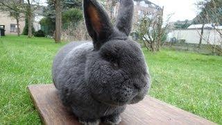 За кроликами. Голландия, Германия март 2013(На видео фотографии из поездки за племенными кроликами в Голландию, Германию в марте 2013 года. Фото, видео,..., 2013-08-17T14:26:26.000Z)