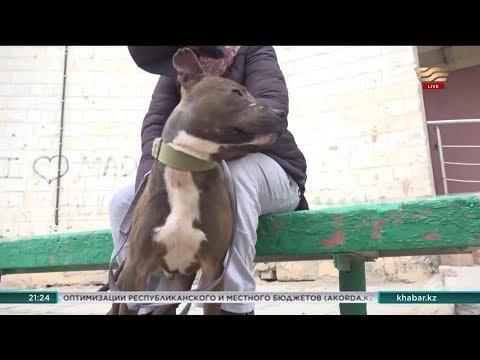 Нелегальные собачьи бои устраивают подростки в Мангистауской области
