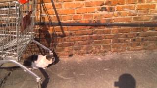 Котейка ловит мышь