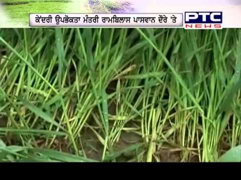 Rain Effect by Crops Damage