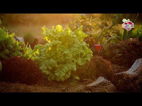School gardens grow health in Austin, Texas