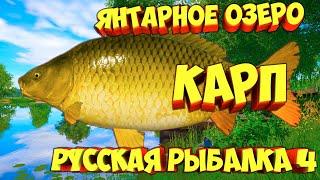 русская рыбалка 4 Карп озеро Янтарное рр4 фарм Алексей Майоров russian fishing 4