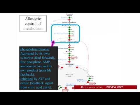 Biochemistry   Metabolic Regulation tutorial
