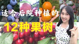 【种植28】12种适合在后院种植的果树/水果果树种植tips| 12 kinds of fruit trees I planted in backyard