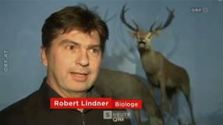 Zu viel Wild belastet die Wälder ORF Salzburg heute
