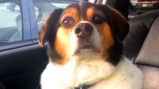 Cute Dog Bloopers & Reactions | Funny Pet Videos
