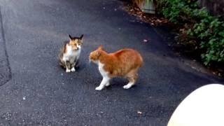 玄関先でノラ猫がケンカしてました。 威嚇の鳴き声がうるさくて。 この...