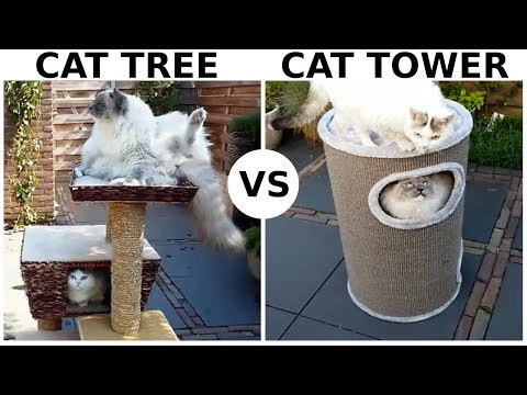 Cat Tree Vs Cat Tower | Which Cat Furniture Do Cats Like Best?