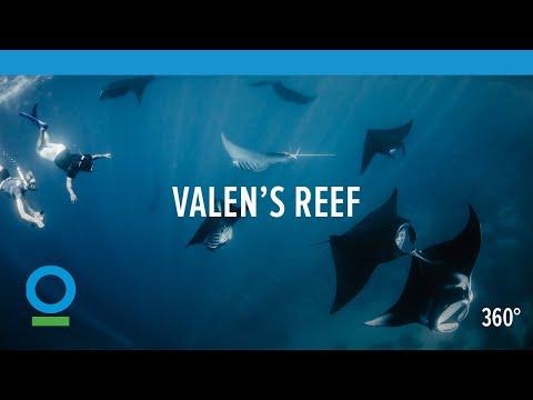 Valen's Reef (360 video)   Conservation International (CI)
