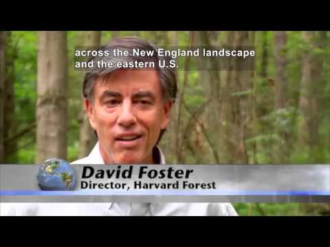Rising CO2 Levels Make Forests Work Overtime (Accessible Preview)