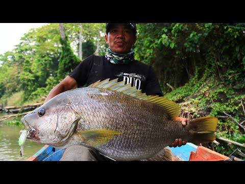 Going Beast Mode Vol.3: Papuan Bass Mantap with Gong Lei