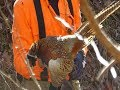 Quail and Pheasant Hunt on Clay WMA