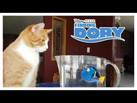 Finding Dory Robo Fish vs. Cat