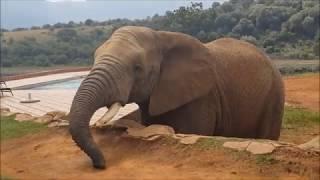 Askari Game Lodge  - Best Safari Experience✔