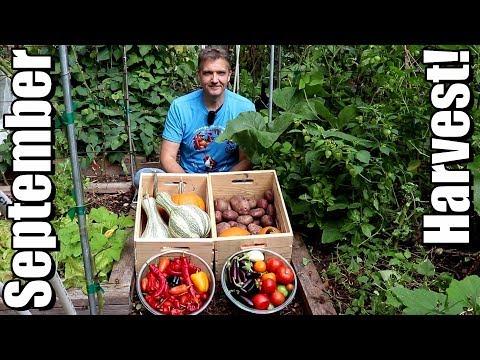 September Vegetable Garden Harvest: Local Food At Its Best!