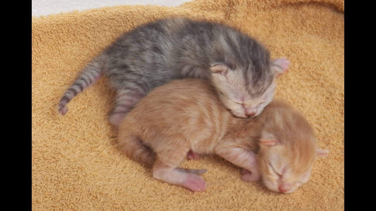 Newborn kittens only one day old