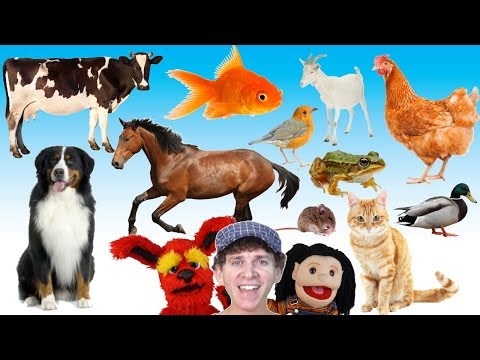 What Do You See? Song | Animals and Sounds | Learn English Kids