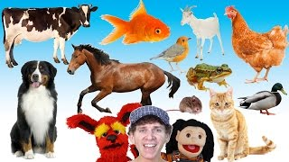 What Do You See Song Animals And Sounds Learn English Kids