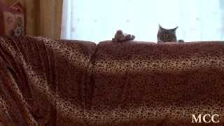 Смешные животные. Смешной кот (#1)