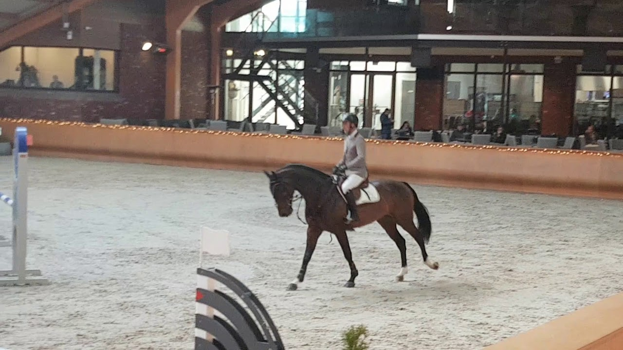Staljoppen Important style 4y aproved stallion #1