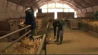 Ils rêvent de devenir bergers!(St-Pouange)