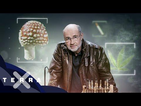 Drogen – Eine Weltgeschichte 1/2 | Ganze Folge Terra X mit Harald Lesch