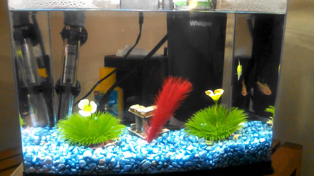 2 5 gallon fish tank update youtube for Fish for 2 gallon tank