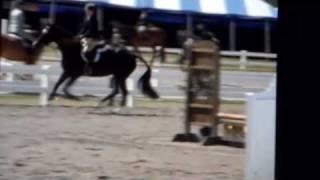 Branch Hill Farms Cincinnati Ohio-Sale Horse Notorious
