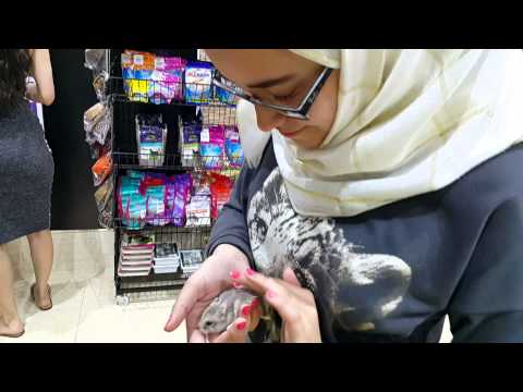 Kangar Pet Shop Dubai 30.03.2015