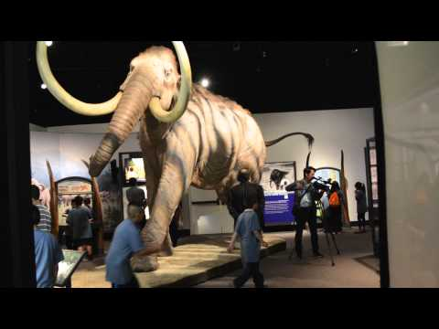 Mammoths and Mastodons at the Field Museum