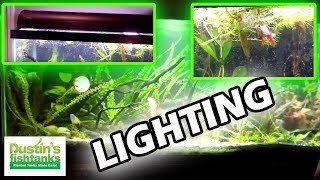 Aquarium Lighting Tips: Are You Afraid Of The Dark?
