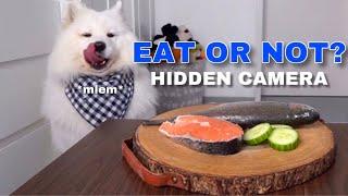 SPY CAM: Will My Dog Steal Food? I Furbo Dog Camera
