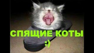 СПЯЩИЕ КОТЫ/ SLEEPING CATS :)