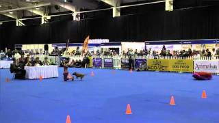 Dog Sport, Dancing: Staffie Wins South African Dancing With Dogs Championship