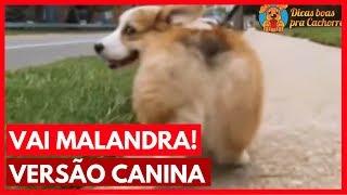 Baixar Vai Malandra - Versão Canina | Anitta, Mc Zaac, Maejor