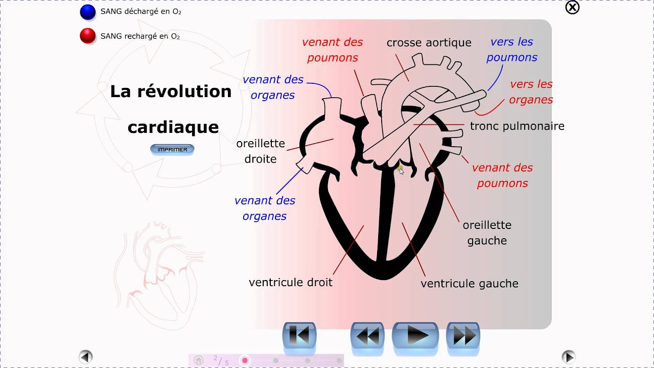 PHYSIOLOGIE CARDIO VASCULAIRE PDF