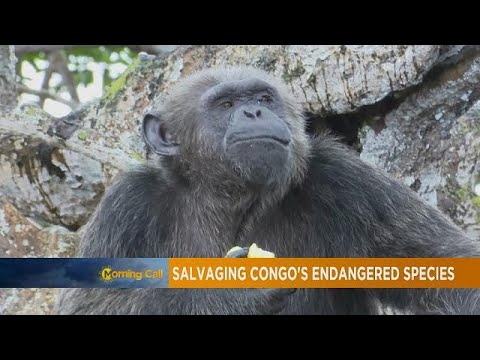 Salvaging Congo's endangered species [Travel]