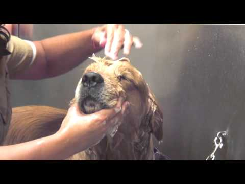 How To Bathe Your Dog : Dog Grooming