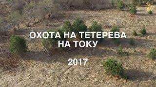 Охота на тетерева на току 2017