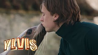 Ylvis - Language of Love [Official music video HD] thumbnail