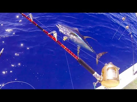 FISHING FOR GIANT YELLOWFIN TUNA IN HAWAII - HAWAII FISHING