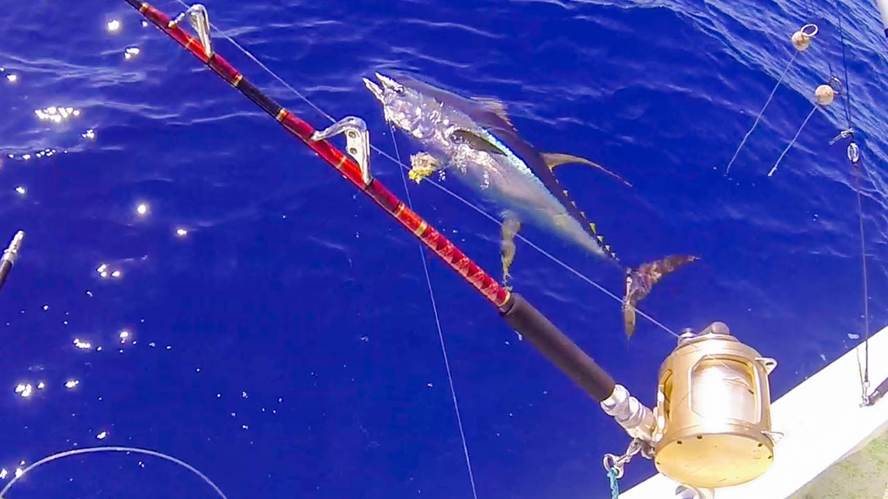 FISHING FOR GIANT YELLOWFIN TUNA IN HAWAII - HAWAII FISHING